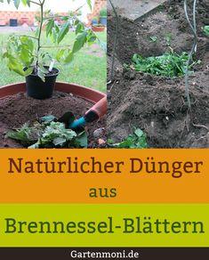 Schon beim Einpflanzen der Tomatenpflanzen kannst Du mit Brennesselblättern am Boden des Pflanzlochs verteilt für ein kräftiges Wachstum sorgen. Die Pflanzen wurzeln an und bekommen wertvolle Nähstoffe über die Brennesselblätter zugeführt. Brennesseln sind ein hervorragender, effektiver und biologischen Dünger