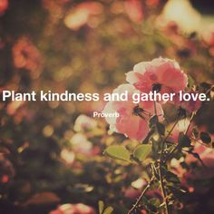 """""""Plant kindness and gather love."""" - Proverb"""