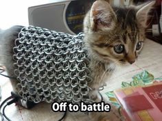 Kitten battle barding