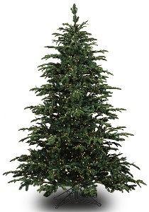 Realistic Pine Tree PNG Clip Art | tree | Pinterest | Pine tree ...