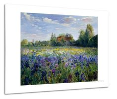 Evening at the Iris Field Metal Print by Timothy Easton - by AllPosters.ie