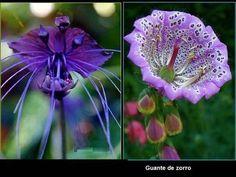 Las Flores Más Exóticas y Hermosas Del Mundo...