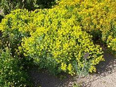ADSAAD Herbs, Plants, Herb, Plant, Planets, Medicinal Plants