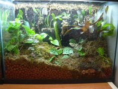 terrarium | vivarium, or a terrarium with animals in it.