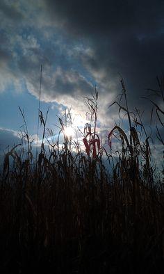 seeing the sun through the corn maze