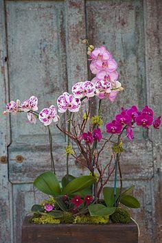 Orchids!!!