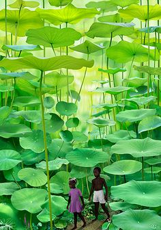 FAKE not a fern forest in Jamaica - which does not exist, this is artwork by Ruud van Empel a Dutch photographer and visual artist. http://www.ruudvanempel.nl/works/163-boy-a-girl.html