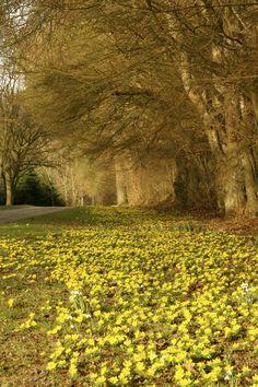 Early spring at Vibedehus, Denmark