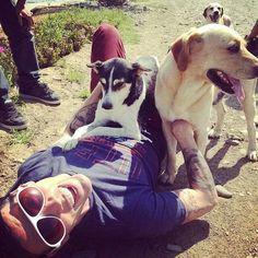 Stv Steve O, Boston Terrier, Dogs, Animals, Boston Terriers, Animales, Animaux, Pet Dogs, Doggies