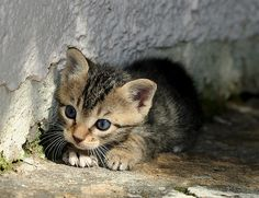stray kitten's first day out,   by Roeselien Raimond