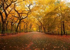 CHOIS Custom Window Film DIY Scenery Forest Trees Yellow Leaves Park Road Frosted Privacy Home Static Cling Film Photo Decal Stickers - Best of Wallpapers for Andriod and ios Fall Wallpaper, Nature Wallpaper, Leaves Wallpaper, Wallpaper Ideas, Central Park, Yellow Leaf Trees, Tree Tunnel, Nature Hd, Autumn Park