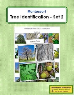 """Tree Identification Cards: Set 2This work includes the following 8 trees: black spruce, grey birch, jack pine, mountain ash, red oak, sugar maple, white oak, white pine.Includes:- 2 Control Charts (each prints on 8"""" x 11"""" paper)- 8 labels- 4 photographic cards for each tree (picture of the tree, bark, leaf, fruit/nut/seed)Individual picture cards are approx. 2"""" x 3""""."""