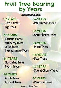 Dwarf Fruit Trees for Your Backyard .You can find Fruit trees and more on our website.Dwarf Fruit Trees for Your Backyard . Fruit Tree Garden, Planting Fruit Trees, Dwarf Fruit Trees, Growing Fruit Trees, Fruit Plants, Garden Trees, Espalier Fruit Trees, Citrus Trees, Peach Trees