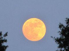 Moonrise at Edisto
