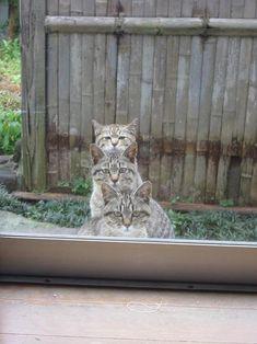 うちの庭がEXILEのステージみたいになっている… : Twitterで人気の猫画像ベスト402―「可愛い」から「笑える」まで - NAVER まとめ