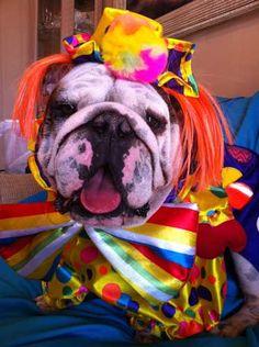 Dog Halloween Costume Contest: Mango the Clown