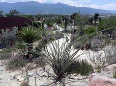 Los desiertos ocupan el 34% de la superficie terrestre. En México abarcan entre el 50% y 60% del territorio y están habitados por una gran diversidad de plantas y animales.   El territorio de Coahuila se ubica dentro de la vasta área del desierto chihuahuense, el más grande de Norteamérica, cuya historia de …