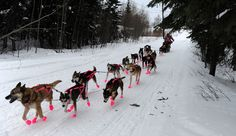 "Pretty in pink. ""DeeDee Jonrowe leaves the checkpoint in Nikolai, Alaska, during the Iditarod Trail Sled Dog Race on March 6. (Marc Lester/Anchorage Daily News via Associated Press)"" #husky Via: http://www.boston.com/bigpicture/2012/03/iditarod_trail_sled_dog_race_2.html"