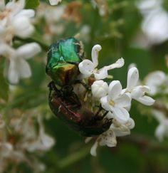 Fotografie Blume Natur Naturfotografie von MoniGossner auf Etsy, €27.50