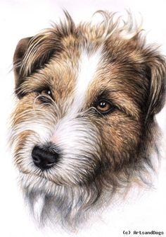 Nicole Zeug - Jack Russell Terrier Portrait