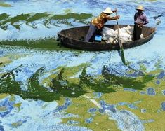 Algae Lake Hefei caused by pollution China. Water Pollution, 6 Photos, Cool Photos, Amazing Photos, Interesting Photos, Top Image, World Environment Day, Look Alike, Morning Sun