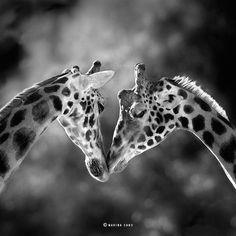 De Marina Cano Impresionantes Fotos capturar la belleza majestuosa de la Vida Silvestre - My Met Moderno