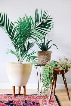 indoor plants and beautiful, mid-century inspired planters