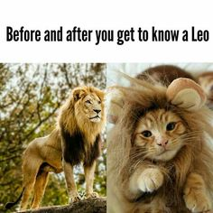Birthday quotes funny men sad Ideas for 2019 Leo Horoscope, Astrology Leo, Leo Quotes, Zodiac Quotes, Zodiac Art, Funny Quotes, Leo Symbol, Leo Personality, Baby Animals