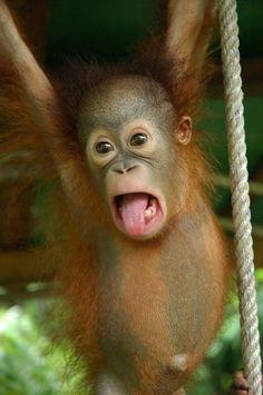 Haha I got to the monkey bars first!!
