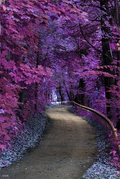 a fabulous wooden garden path, or maybe a narrow road..... no info re location, etc. It is beautiful setting!!! Leaves are unusual colors too....