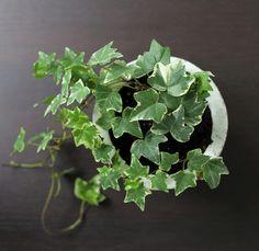Ta sticklingar av krukväxter – guide | ELLE Decoration