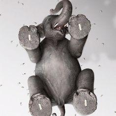 Cute little elephant :)