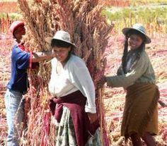 Quinoa Becomes Unaffordable! | ifood.tv
