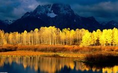 Mountain-Yellow-Forest.jpg