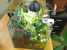 アクアテラリウムを作ろう!(2) 陸上植物の選定   TUKTUK Aquarium, Addiction, Projects To Try, Home Decor, Terrariums, Goldfish Bowl, Decoration Home, Room Decor, Fish Tank