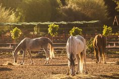 Viverde Berke Ranch Hotel Kemer Horse Riding Club