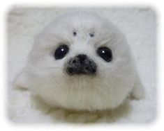 Felt wool seal