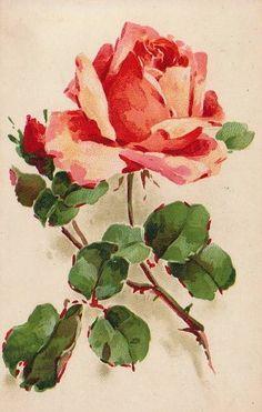 Vintage Images: Catherine Klein postcards