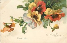 PANSIES appear to hang down from upper right