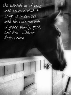 Beautiful horse quotation. Photo of retired racehorse at http://www.bransbyhorses.co.uk/