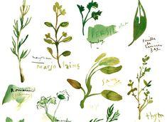 Guide rapide pour cultiver vos plantes aromatiques