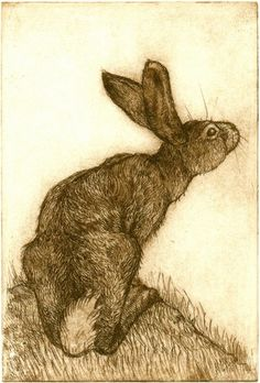 Hare Looking Up, etching, 13 x 9 cm, by Anna Ravenscroft
