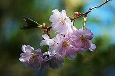Flor De Primavera, Árbol, La Naturaleza