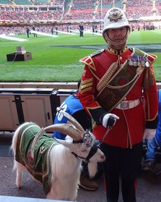 """William (""""Billy"""") Windsor, the goat of the Welsh Regiment, at Cardiff for the rugby six nations on 10th March 2012"""