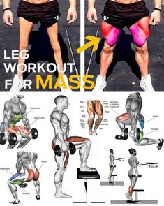 """🔥 LEGS GROW – SQUAT EXERCISE ✅ No matter how great you look from the waist up, neglecting the development of your legs will ultimately make your physique appear weird and unbalanced. Leg training isn't something that should be saved for """"later"""", once you Fitness Workouts, Leg Workouts For Mass, Weight Training Workouts, Muscle Building Workouts, Dumbbell Back Workout, Squat Workout, Gym Workout Tips, Biceps Workout, Squat Exercise"""