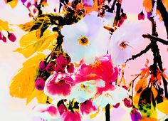 Vibrant Blossom Digital Textile Print