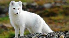 Resultado de imagen para cutest animals