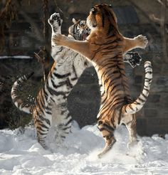 leon vs leon