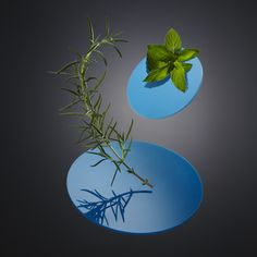 Visualizing Scent - Rosemary and Peppermint by Nik Mirus and Oliver Stenberg Bold Colors, Colours, Still Life Photography, Art Direction, Peppermint, Product Photography, Artist, Contemporary, Olives