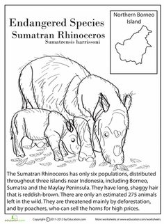 Worksheets: Endangered Species: Sumatran Rhinoceros Help your child read this page about the Sumatran rhinoceros, where he can color an illustration as he learns about why this animal is endangered. Endangered Animals Facts, Extinct Animals, Endangered Species, Animal Activities For Kids, Animals For Kids, Sumatran Rhinoceros, Animal Worksheets, Coloring Worksheets, Kids Worksheets
